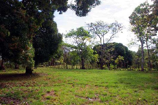 View of the lot at La Casa Verde Panama